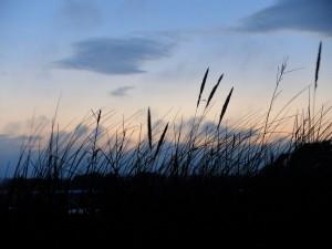 Dune grasses against the setting sun