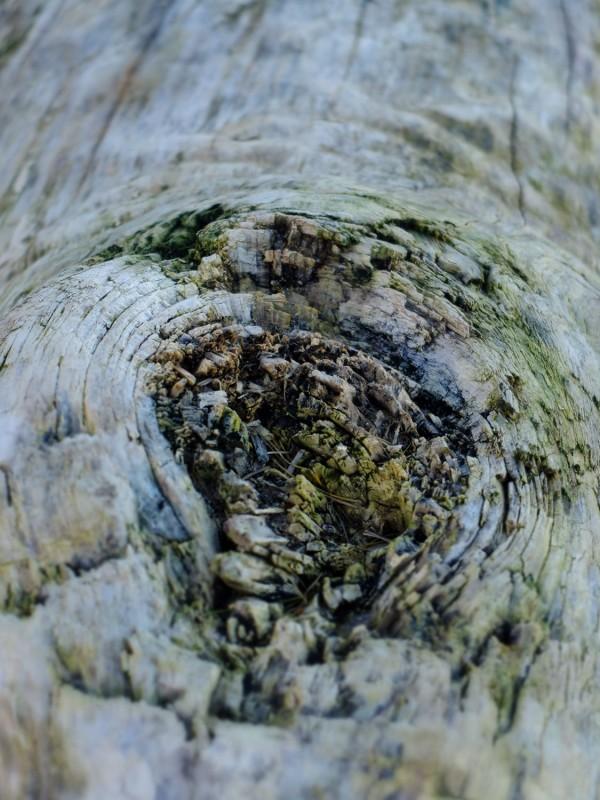 wood2