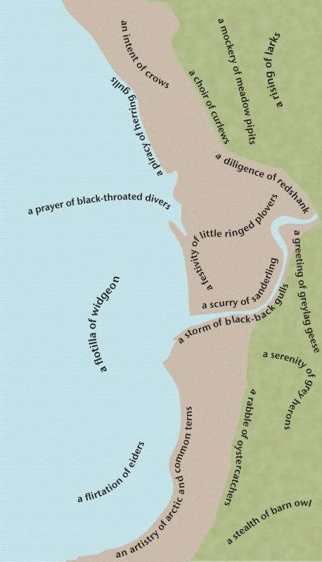 bird-map