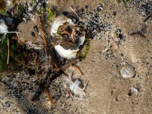 flotsam-crabs