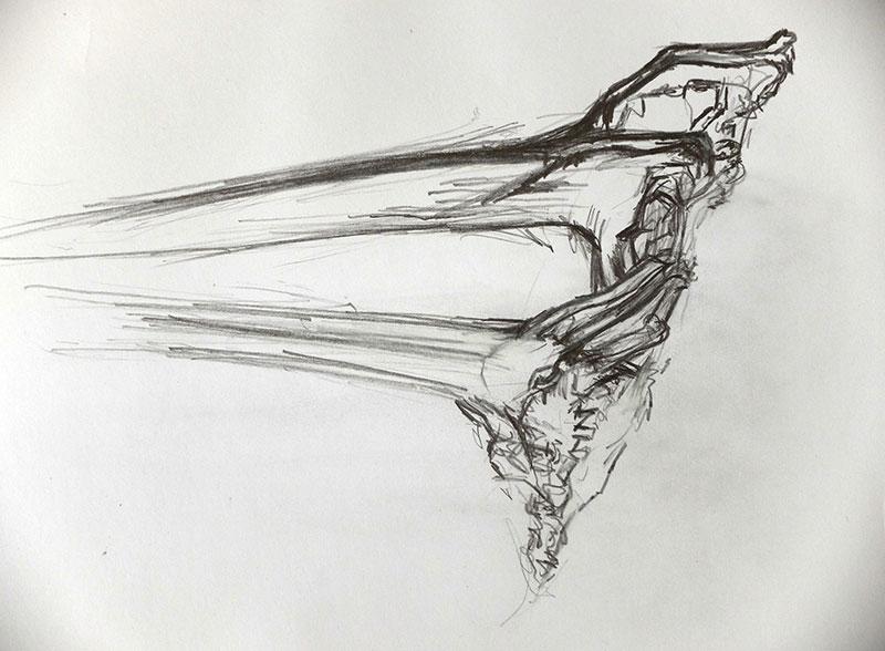 kelp-holdfast