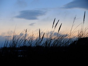 Dune grasses against the setting sun